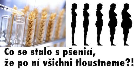 Co se stalo s pšenicí, že po ní všichni tloustneme?!