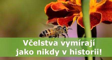 Časopis Šifra: Včelstva vymírají jako nikdy v historii. Dva včelaři vyrazili do boje za jejich záchranu