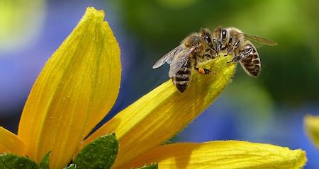 Alžběta Matiášová: Jak zmírnit homeopaticky následky včelího štípnutí či bodnutí hmyzem