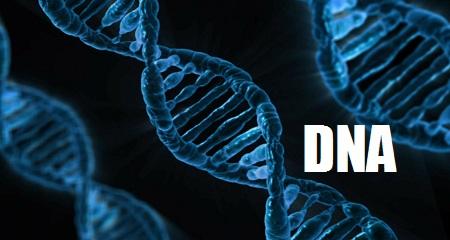 Ivana Valová: DNA