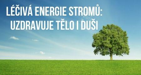 LÉČIVÁ ENERGIE STROMŮ: UZDRAVUJE TĚLO I DUŠI